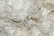 Cotton String Nesting Material - 454g (1lb) Big Bag