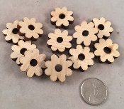 Canadian Pine Daisies - Mini - 1
