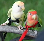 Aviator Flight Harness - Mini - Green- Fits Lovebirds, Parrotlet