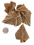 Palm Leaf Minis - Natural - 12pc