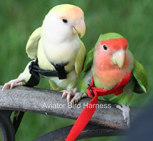 Aviator Flight Harness - Mini - Black- Fits Lovebirds, Parrotlet