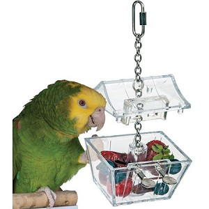 Parrot's Treasure Forager