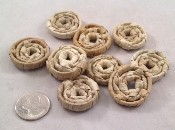 "Palm Loonies - 1"" - 6pc"